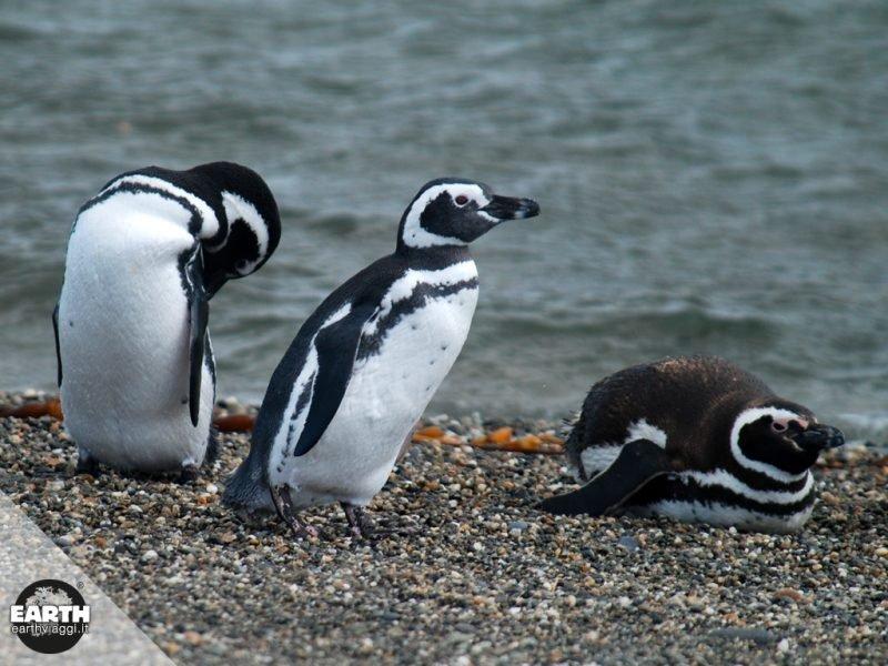 Cile, alla scoperta della Pinguinera di Seno Otway