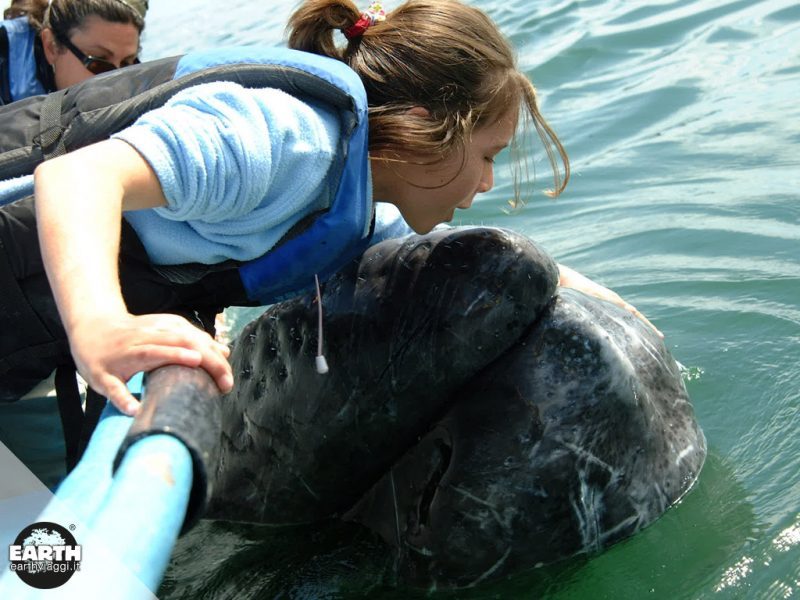 Incontro con la balena grigia in Baja California