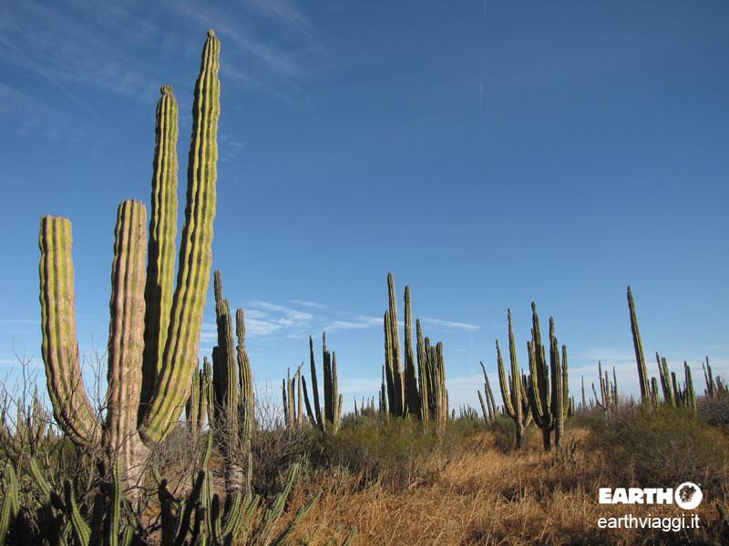 Alla scoperta della natura della Baja California
