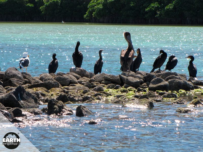 Islas Coronado, nel cuore della natura di Baja California