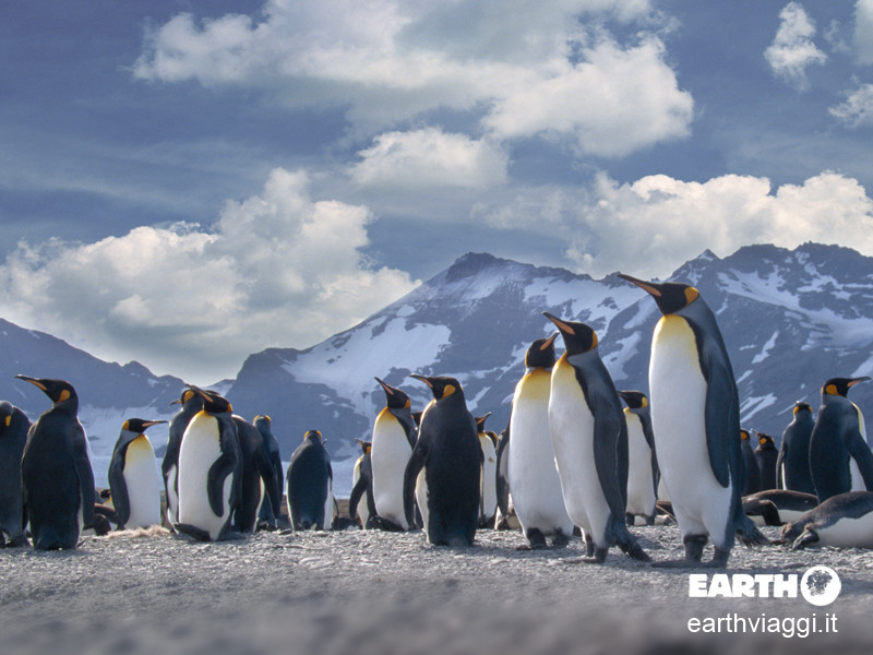 Consigli utili per visitare l'Antartide