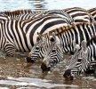 Consigli utili per visitare la Tanzania