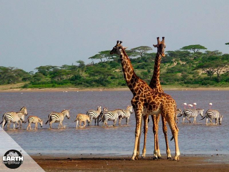 Tanzania, alla scoperta del Serengeti National Park
