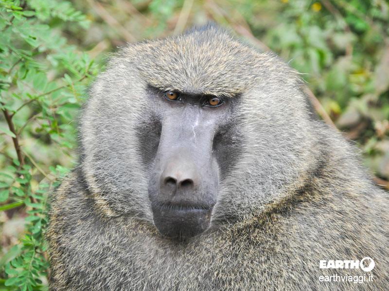 Njokamoni Trail, alla scoperta dei primati in Tanzania