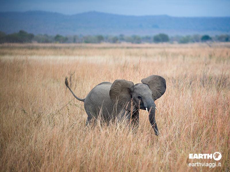 Ruaha National Park, naturalmente Tanzania