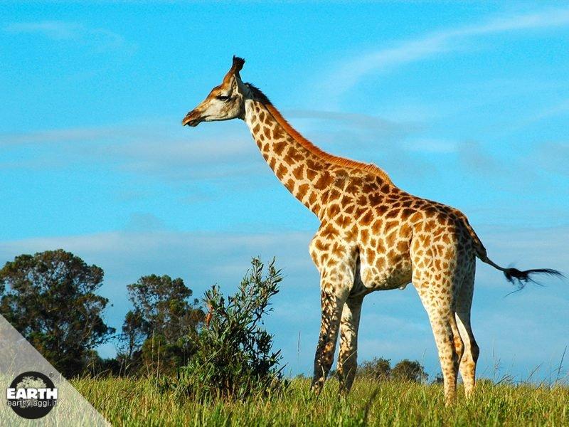 Etosha National Park, pure suggestioni africane
