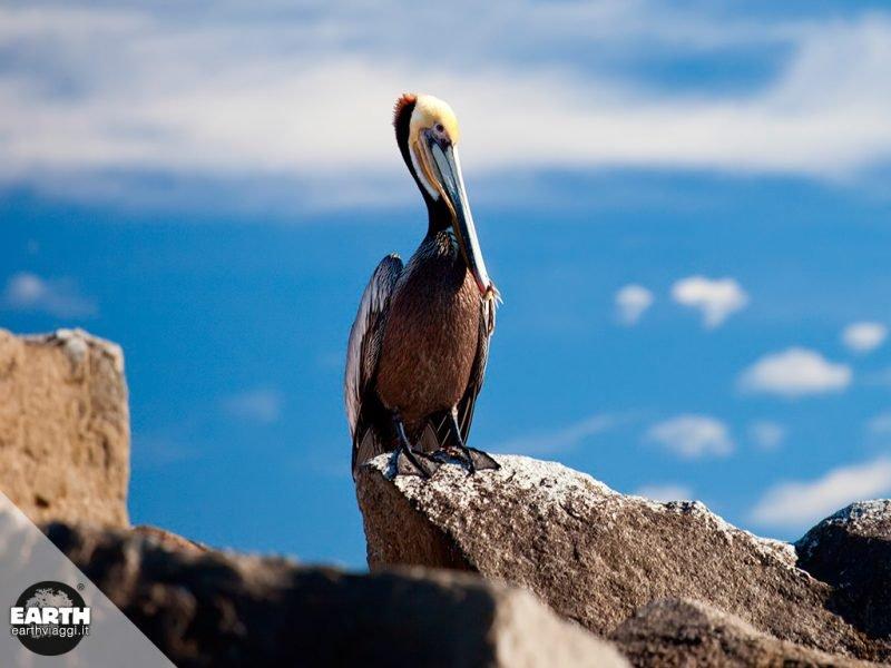 Piccola guida alla fauna di Baja California