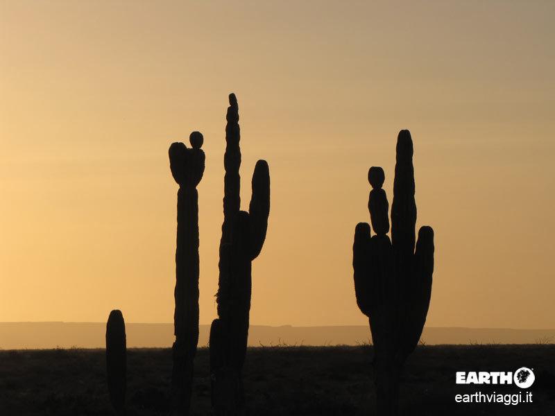 Dieci buoni motivi per un viaggio in Baja California