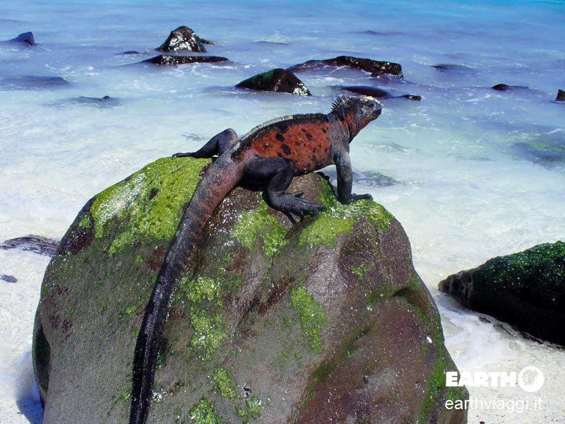 crociera alle Galapagos