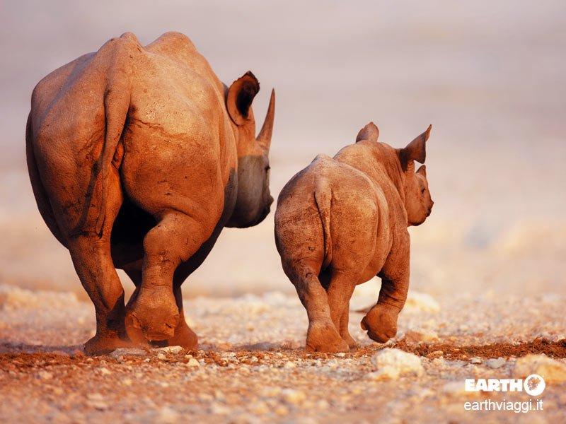 Racconto per immagini del Botswana