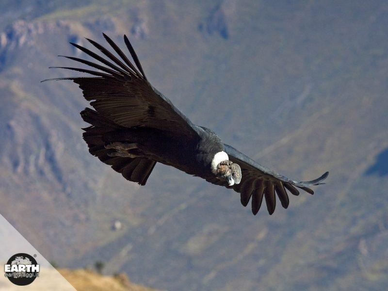 Alla scoperta del Cruz del Condor in Perù