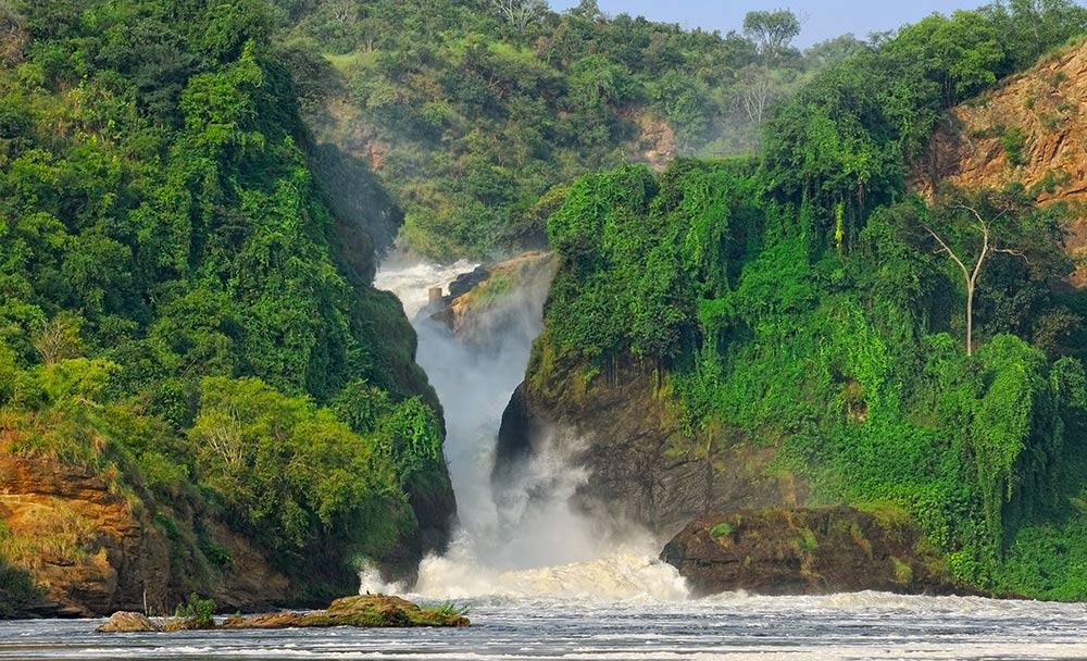 Uganda, l'incontro con i gorilla di montagna