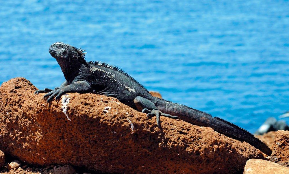 "Ecuador: tra tartarughe giganti e vulcani la patria del ""buen vivir"""
