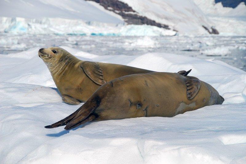 Antartide: estremo, selvaggio e incontaminato