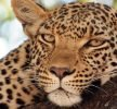 Botswana: alla ricerca dei big five