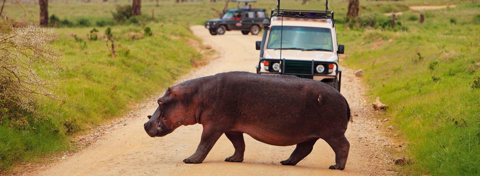 In viaggio alla scoperta degli altipiani di Ngorongoro