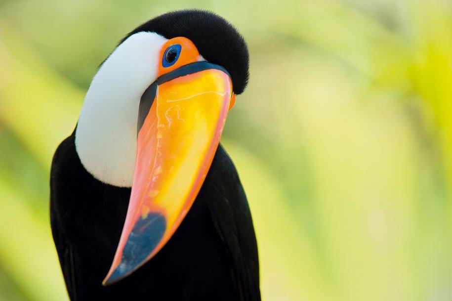 tucano-costa-rica