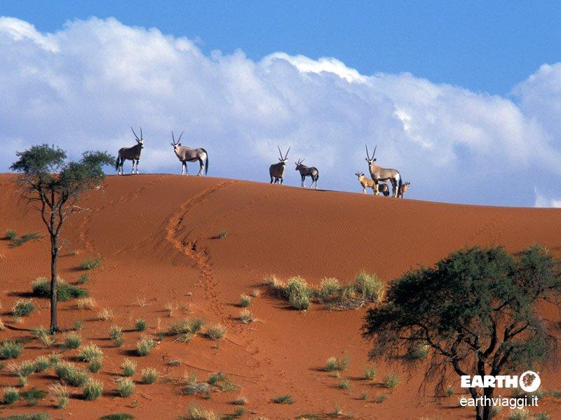 In viaggio nel deserto del Namib