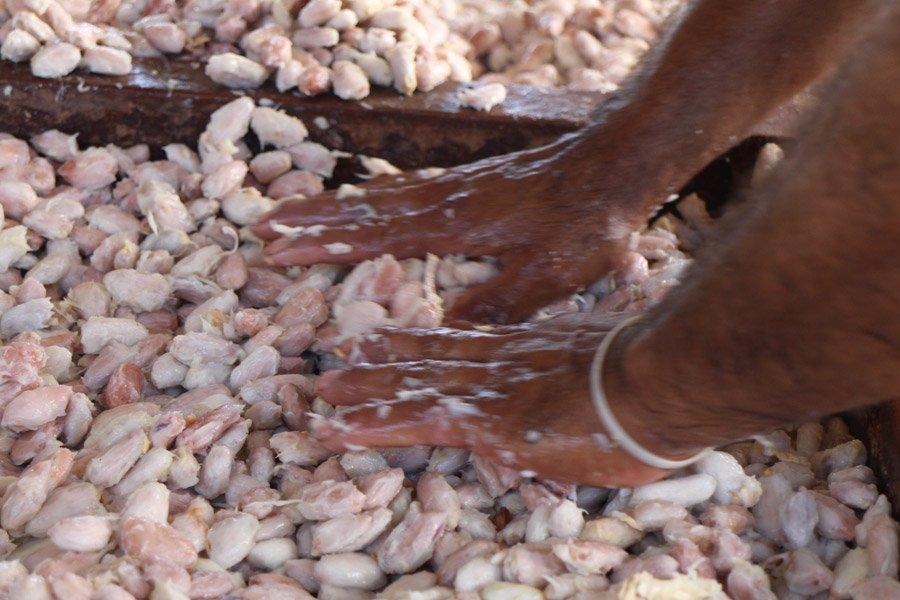 Piccola guida al cacao peruviano