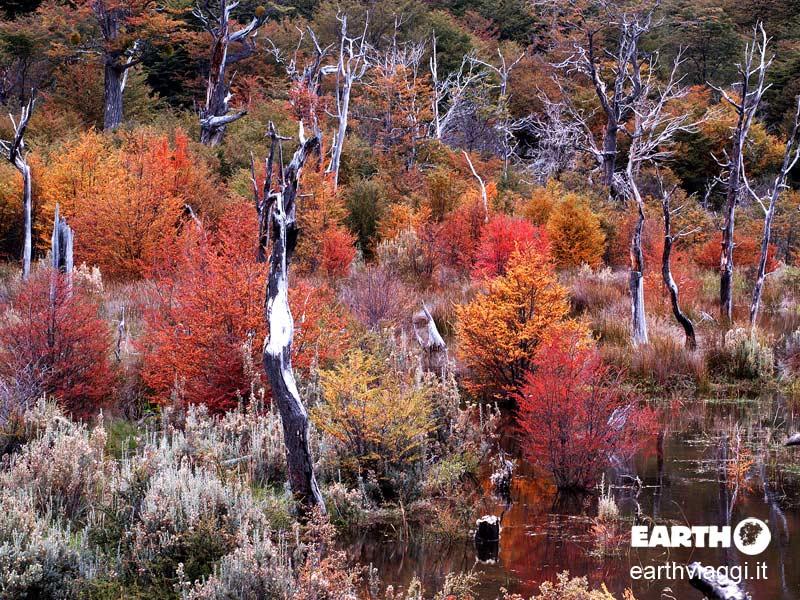 Viaggio nella natura della Patagonia