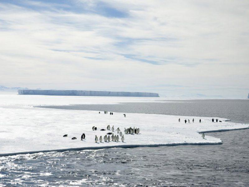 Il Mare di Ross diventa la più grande riserva marina del pianeta