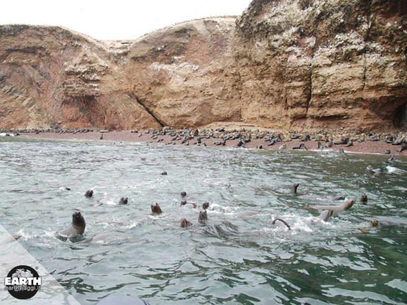 Perù, alla scoperta delle Isole Ballestas