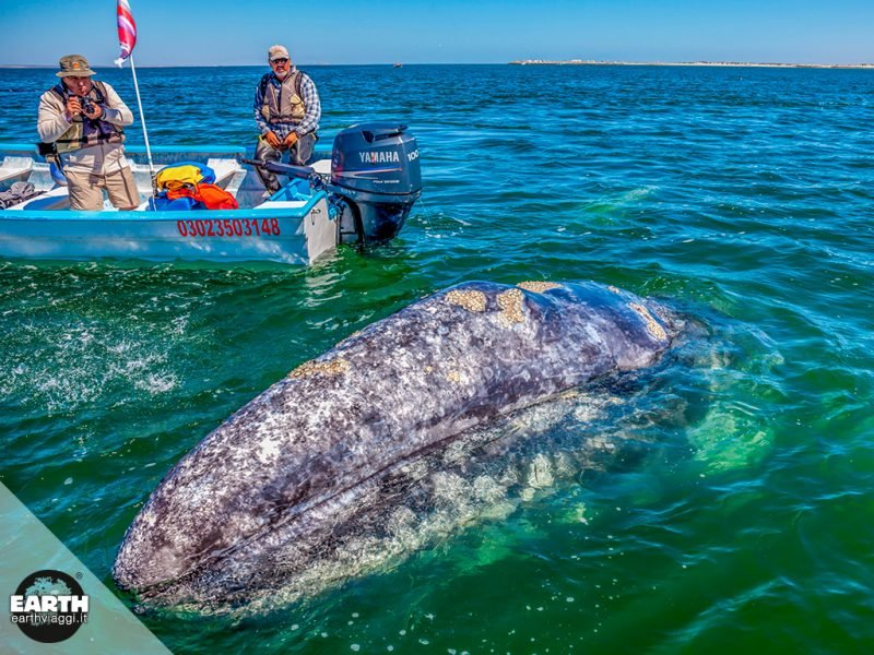 Whale watching in Baja California, nella natura più pura