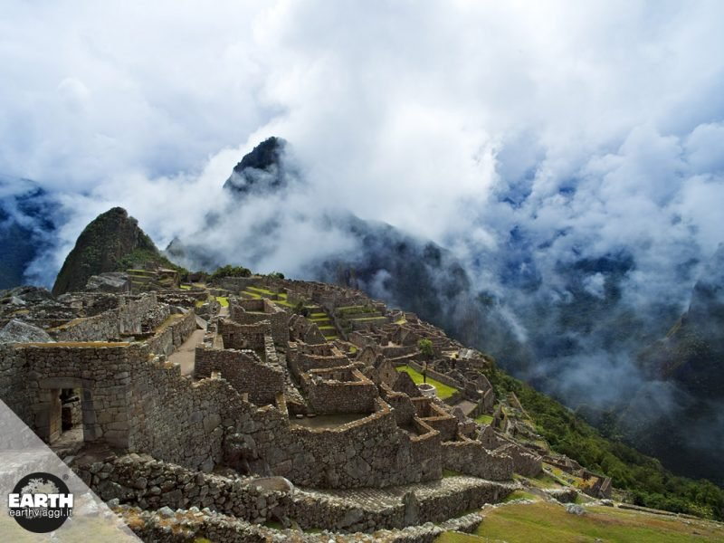 L'orso andino vive a Machu Picchu