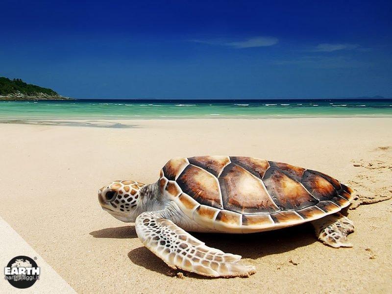 Piccola guida alle destinazioni migliori per vedere le tartarughe marine