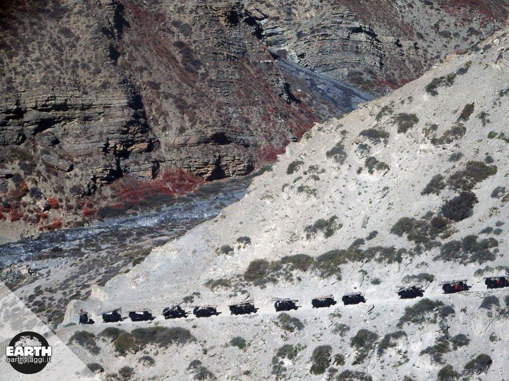 Nepal: Dolpo raccontato da Paolo Cognetti, Premio Strega 2017