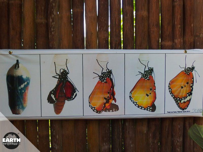 Il Parco delle Farfalle di Luang Prabang