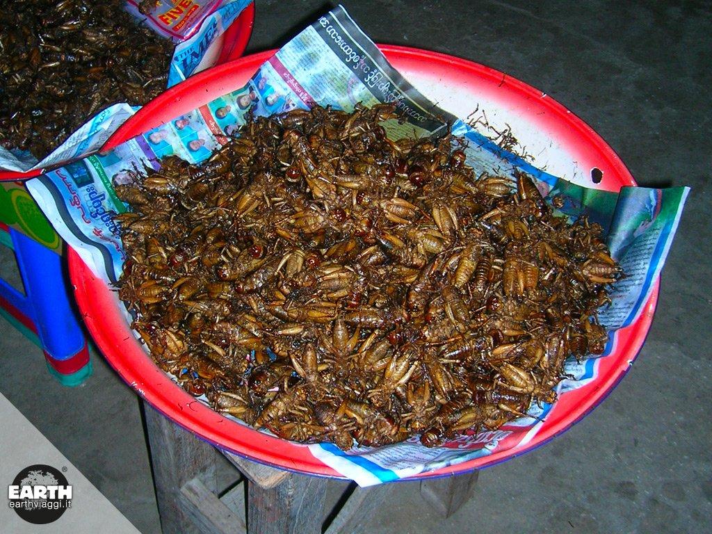 Fiori o insetti l arte di raku inoue racconta la natura fra