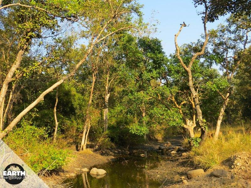Il Kanha National Park e la Pench Tiger Reserve