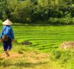 Quali libri leggere prima di partire per un viaggio in Vietnam