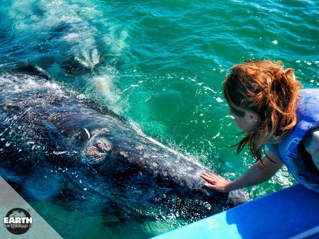 Whale watching a Laguna di San Ignacio, nel segno della sostenibilità