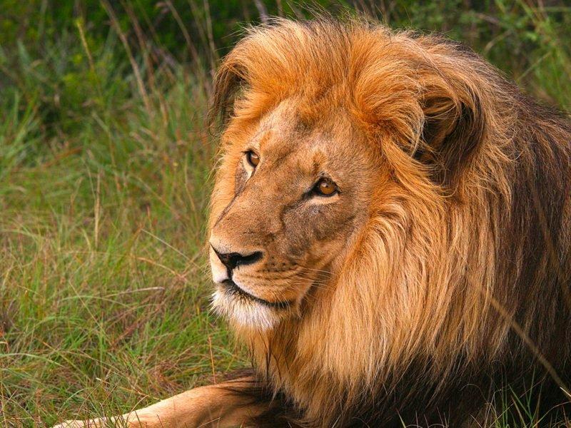 Piccola guida alla natura del Sudafrica