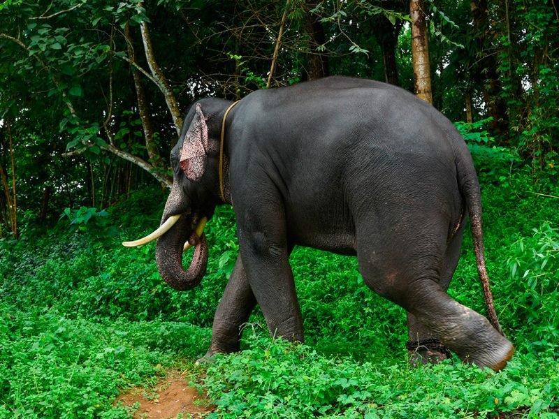 Kerala, alla scoperta del Parco Nazionale di Periyar