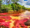 Cano Cristales, il fiume più bello del mondo è in Colombia
