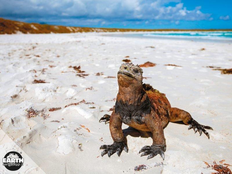 Come raggiungere le Galapagos dall'Ecuador e altre informazioni utili