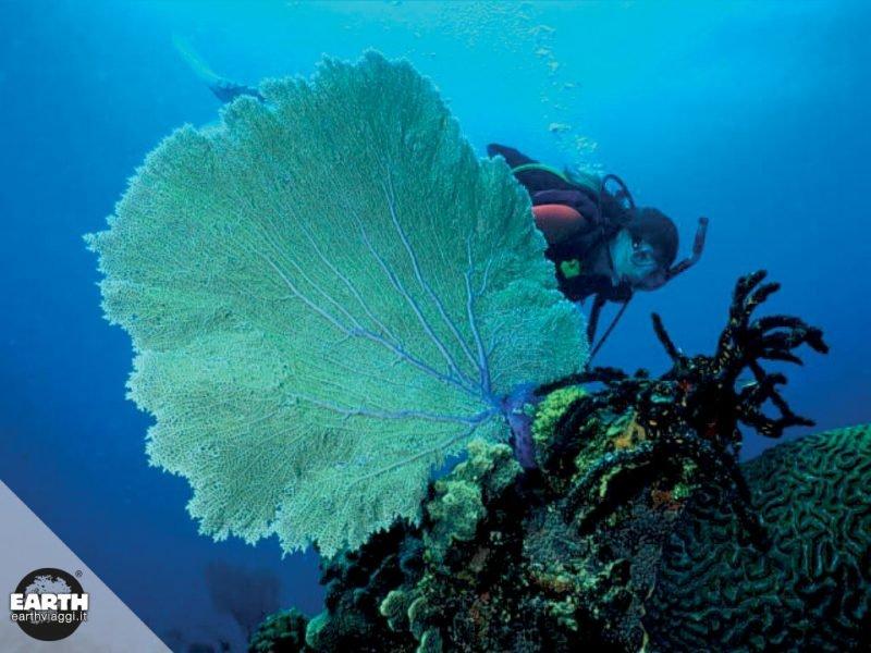 Gli oceani e l'inquinamento da plastica, un approfondimento