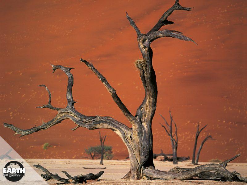 Visitiamo la Foresta Pietrifica in Namibia