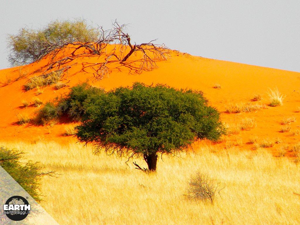 Deserto del Kalahari, l'ultima frontiera