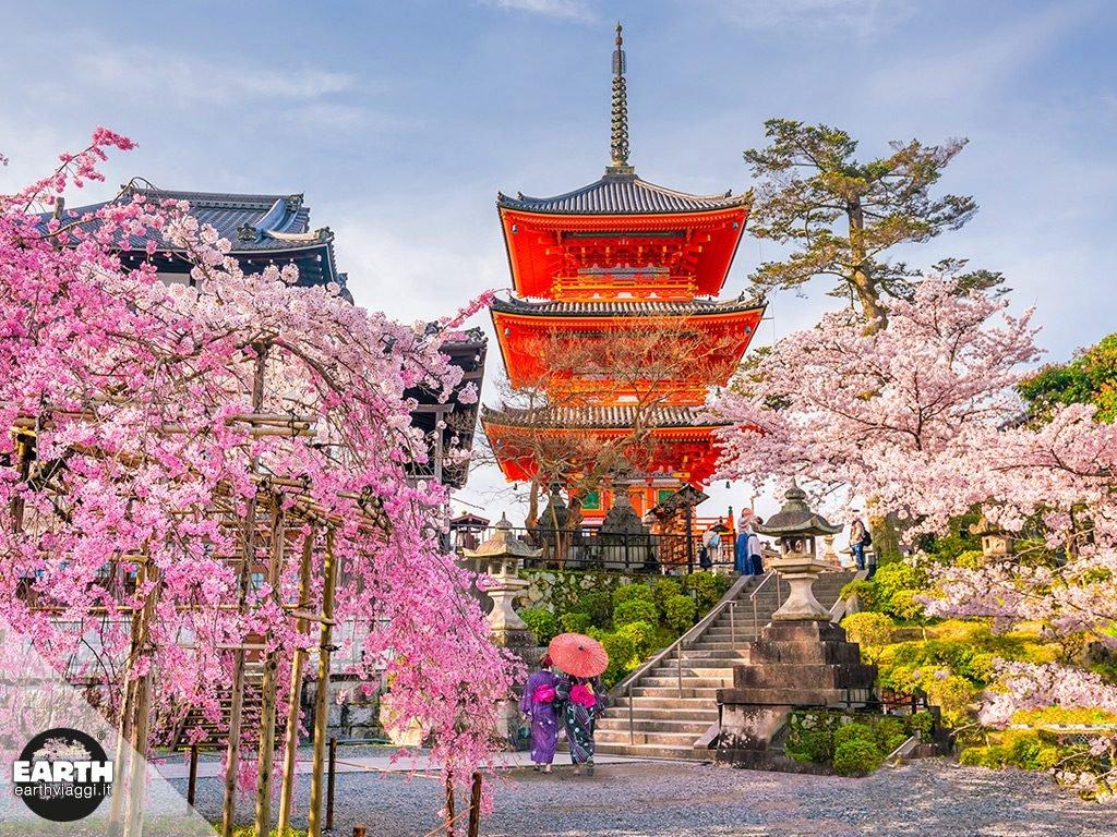 Uno spettacolo giapponese: la fioritura dei ciliegi