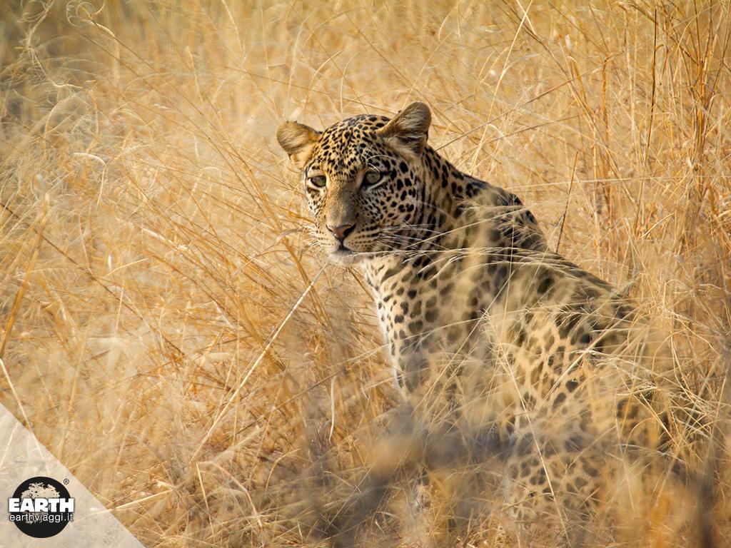 Tarangire National Park, avventura nella natura della Tanzania