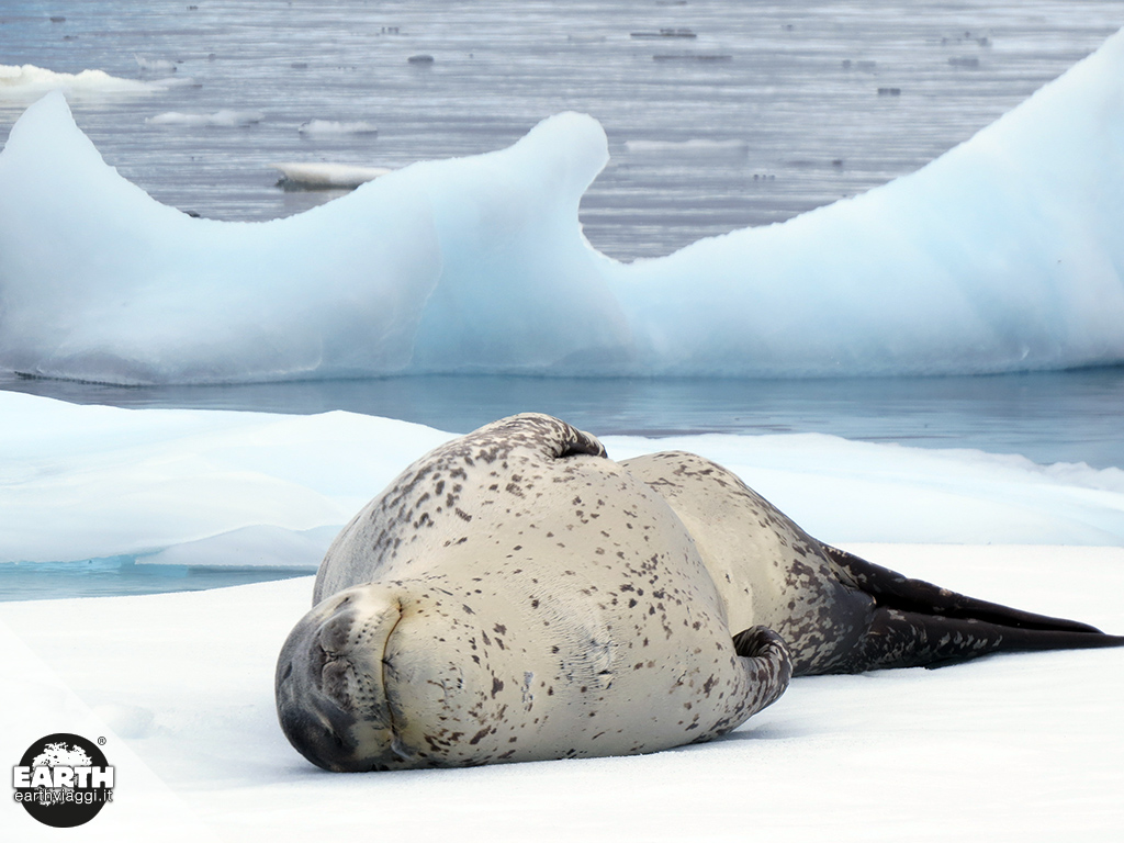 Alla fine del mondo: kayak tra iceberg e colonie di foche in Antartide