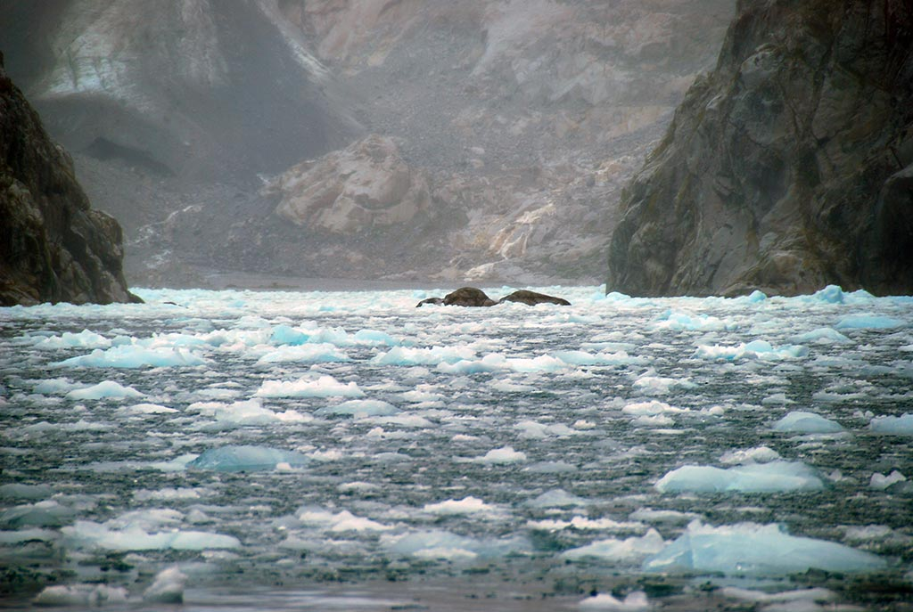 Scoprire i fiordi della Terra del Fuoco in crociera