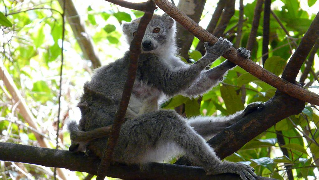 Il mio Madagascar