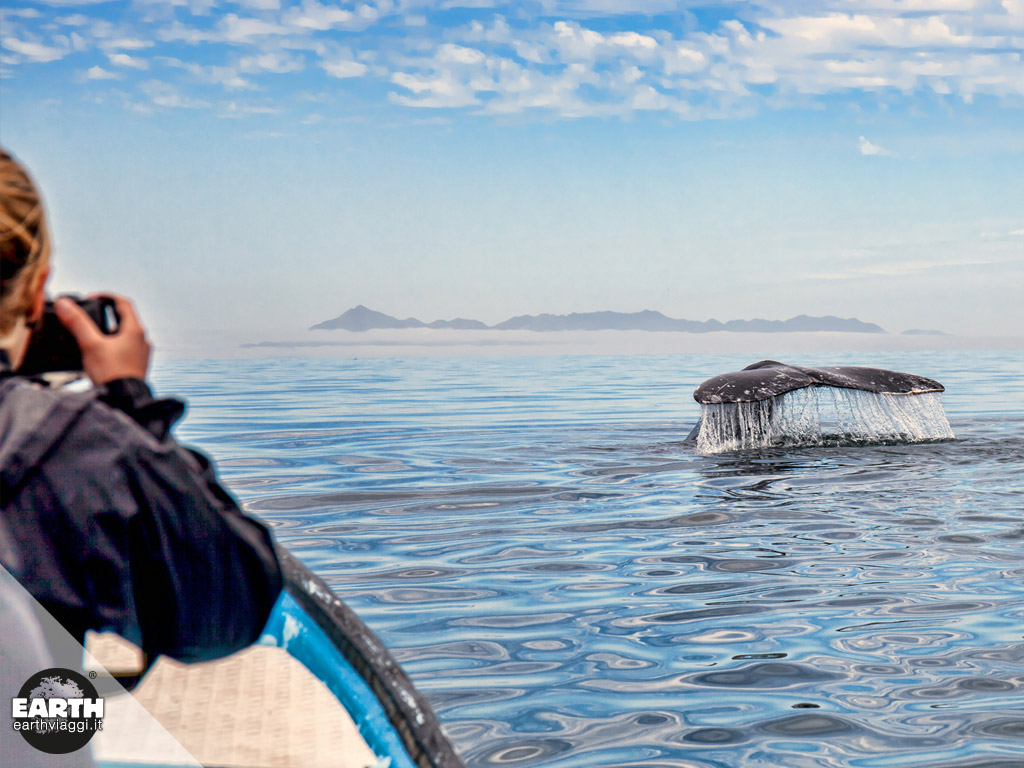 La simpatica balena grigia della Baja California