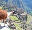 guardiani dei monumenti, Machu Picchu
