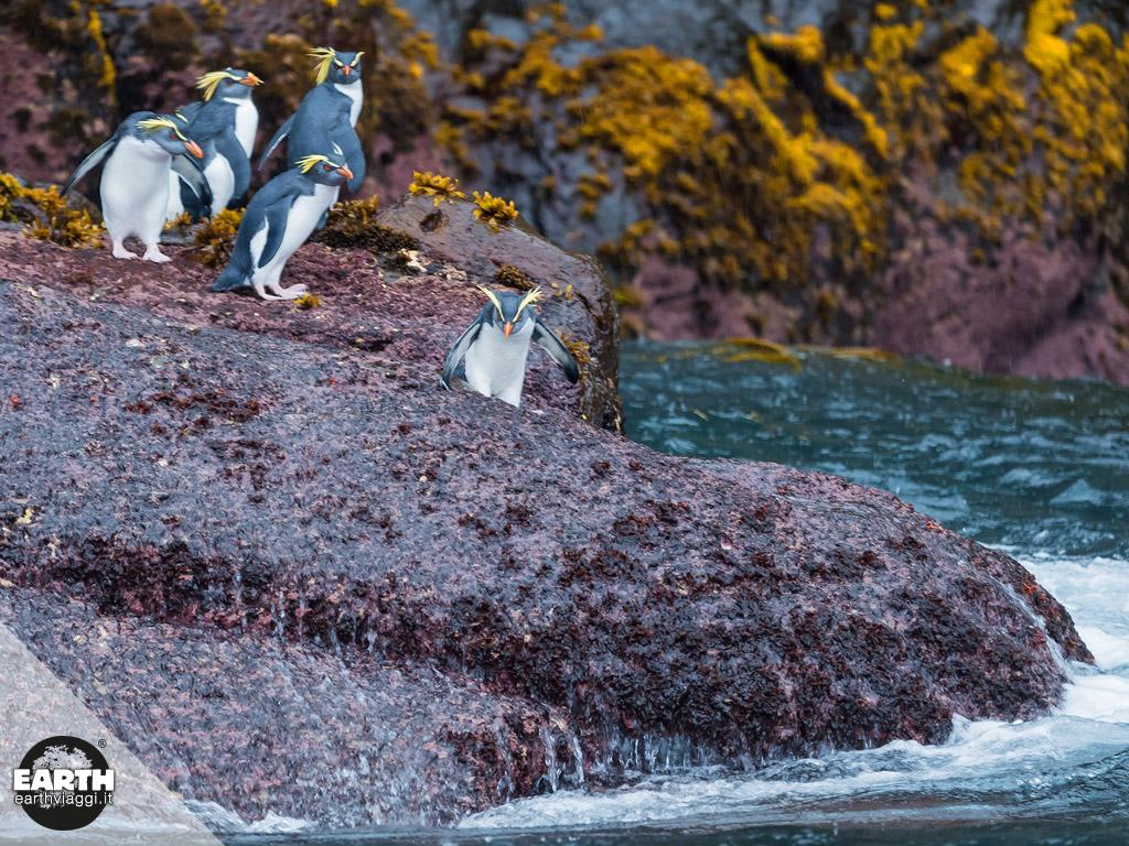 Tristan da Cunha, la nuova area marina più grande dell'Atlantico